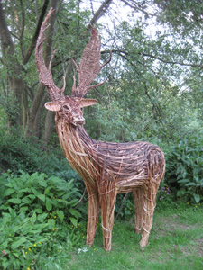 stag woven from willow by Beryl Smith